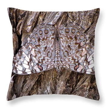Throw Pillow featuring the photograph Ferentina Calico Butterfly by Sean Griffin