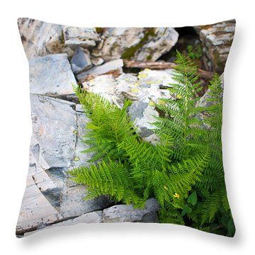 Fern Among Glacial Rock Throw Pillow