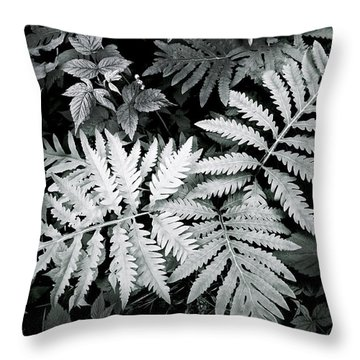 Fern At Bald Rock Throw Pillow