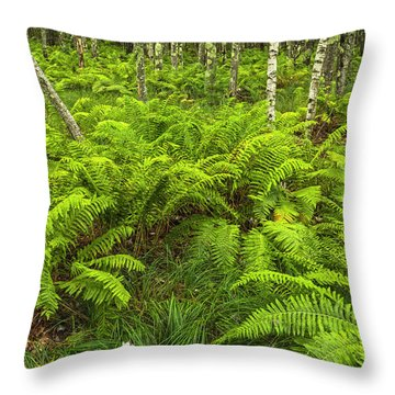 Ferns And Birch In Soft Light Throw Pillow
