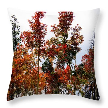 Festive Fall Throw Pillow