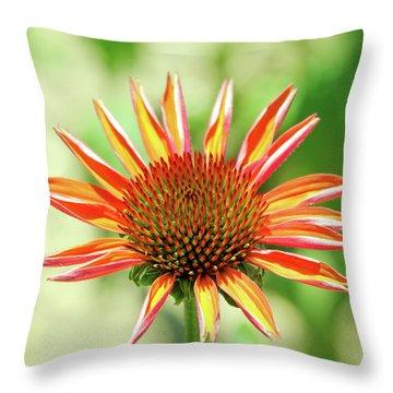 Throw Pillow featuring the photograph Fibonacci by David Chandler