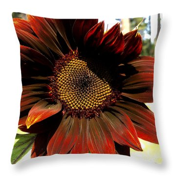 Fibonacci Hues Throw Pillow