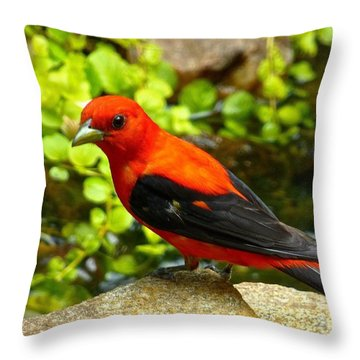 Fiddle-dee-dee Throw Pillow