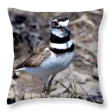 Field Killdeer Throw Pillow