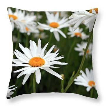 Field Of Daisies Throw Pillow by Dorothy Cunningham