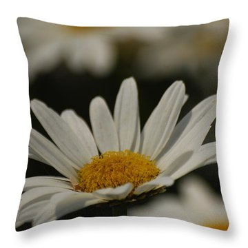 Throw Pillow featuring the photograph Field Of Daisies by Ramona Whiteaker