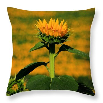 Throw Pillow featuring the photograph Field Of Gold by Chris Berry