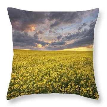 Field Of Gold Throw Pillow by Dan Jurak