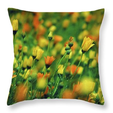 Field Of Orange And Yellow Daisies Throw Pillow