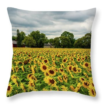 Throw Pillow featuring the photograph Field Of Sunshine by Louis Dallara