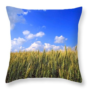 Field Of Wheat  Throw Pillow by Sandra Cunningham