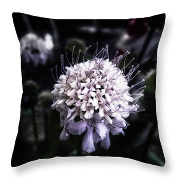 Throw Pillow featuring the photograph Field Scabious. A Member Of The by Mr Photojimsf