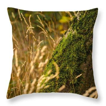 Fields Of Gold Throw Pillow by Daniel Precht