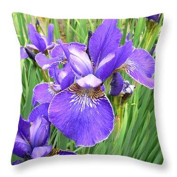 Fields Of Purple Japanese Irises Throw Pillow by Jennie Marie Schell