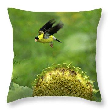 Finch Flight Throw Pillow