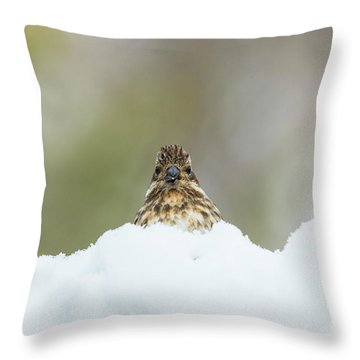 Female Purple Finch Throw Pillow