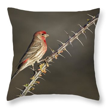 Finch On Ocotillo Throw Pillow