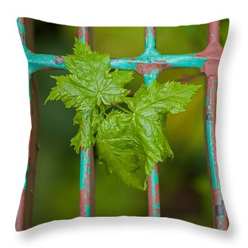 Throw Pillow featuring the photograph Finding The Light by Fran Riley