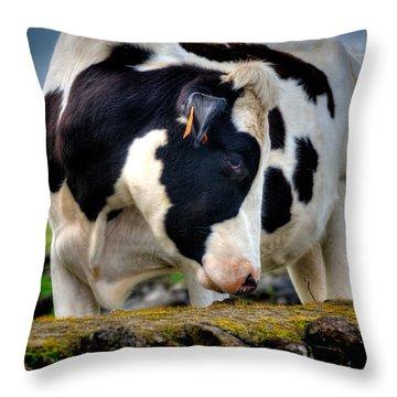 Fine Art Colour-136 Throw Pillow