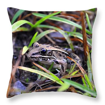 Throw Pillow featuring the photograph Fine Frog by Al Powell Photography USA