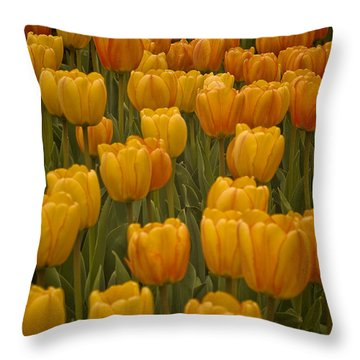 Fine Lines In Yellow Tulips Throw Pillow by Michael Flood