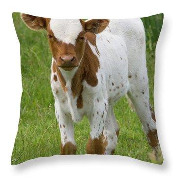 Fine Looking Longhorn Calf Throw Pillow