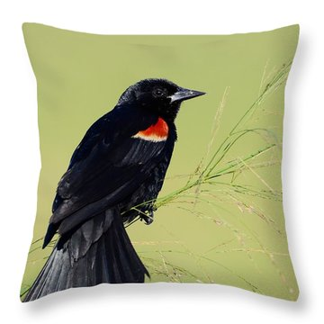 Fine Perch Throw Pillow by Kathy Gibbons