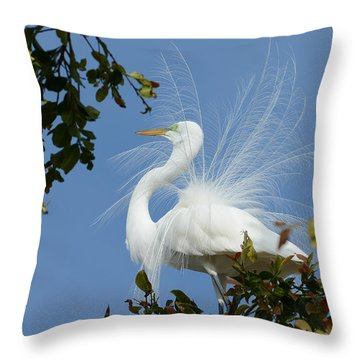 Throw Pillow featuring the photograph Finery by Fraida Gutovich