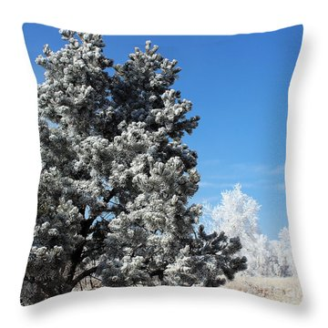 Fir Full Of Ice Throw Pillow