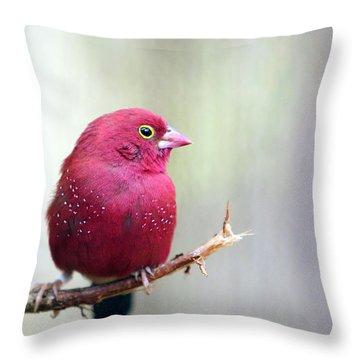 Fire Finch Throw Pillow