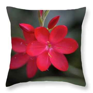 Fire Lily 2 Throw Pillow