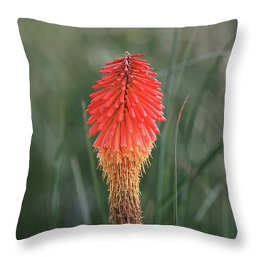 Throw Pillow featuring the photograph Firecracker by David Chandler