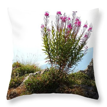 Fireweed Epilobium Angustifolium Throw Pillow