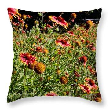 Firewheel Wildflower Throw Pillow