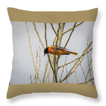 Throw Pillow featuring the photograph First Baltimore Oriole Of The Year  by Ricky L Jones