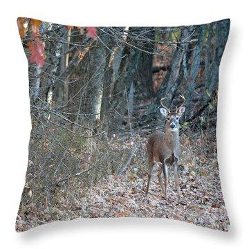 First Buck  Throw Pillow by Brenda Bostic