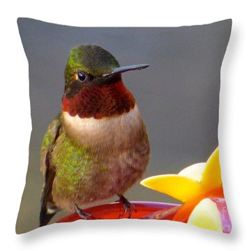 First Hummer Of 2015 Throw Pillow