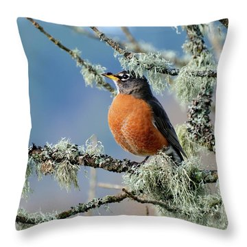 First Robin Of The Spring Throw Pillow