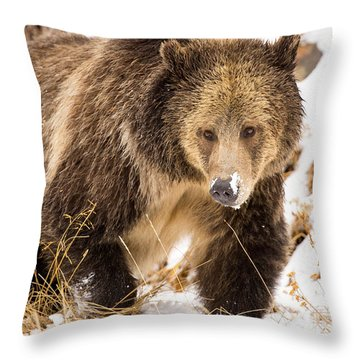 First Snow Throw Pillow by Aaron Whittemore