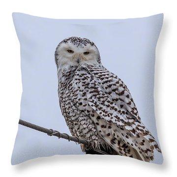 First Snowy Owl Throw Pillow