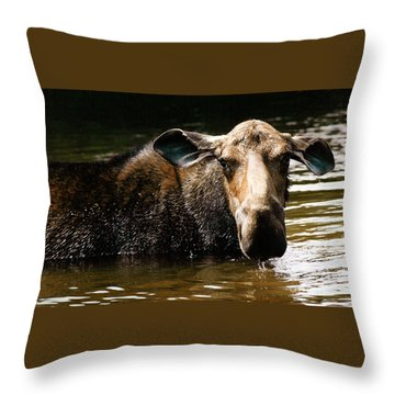 First West Branch Pond Moose Throw Pillow