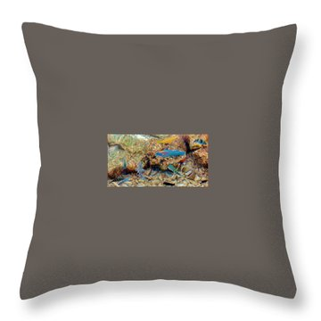 Fish Throw Pillow by Betty Buller Whitehead