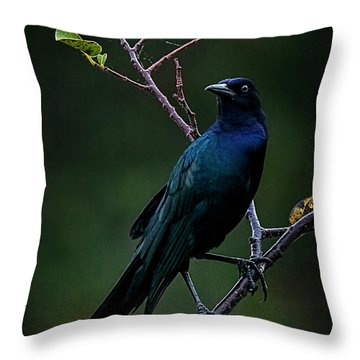Male Boat-tailed Grackle Throw Pillow by Cyndy Doty