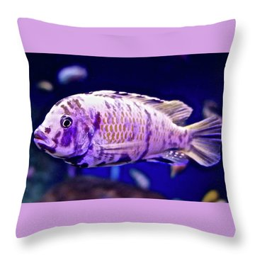 Calico Goldfish Throw Pillow