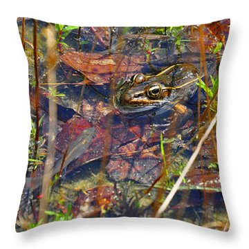 Throw Pillow featuring the photograph Fish Faces Frog by Al Powell Photography USA