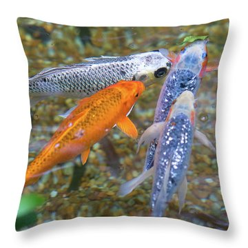 Fish Fighting For Food Throw Pillow