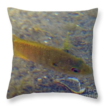Fish Sandy Bottom Throw Pillow