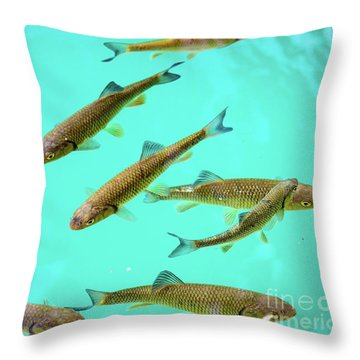 Fish School In Turquoise Lake - Plitvice Lakes National Park, Croatia Throw Pillow