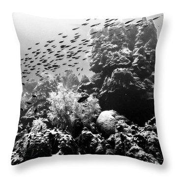 Throw Pillow featuring the photograph Fish School Rainbow by Perla Copernik